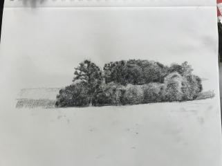 Study: stand of trees, Dawson's sideroad near 4th concession