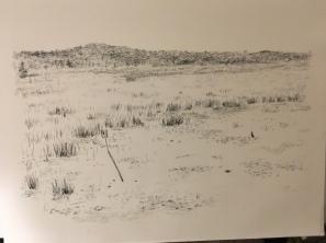 Tiny Marsh