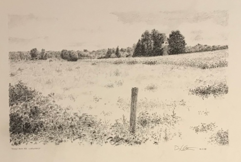 Triple Bay Road cornfield