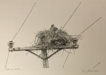 Osprey nest, Rama Rd.